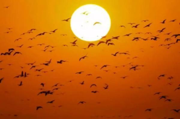 【生态文明@湿地】重磅 | 天津这里要申报世界自然遗产啦!