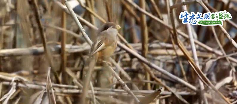 【生態文明@濕地】濕地美景惹人醉 鳥兒枝頭來筑巢