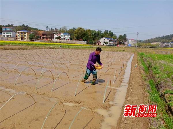 衡东:抢抓时令忙春耕 打造百亩机收再生稻高产攻关示范片
