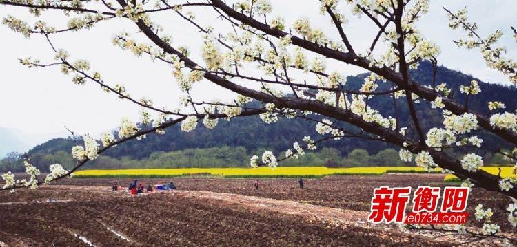 陽春三月種煙忙 常寧市廟前鎮抗疫生產兩不誤