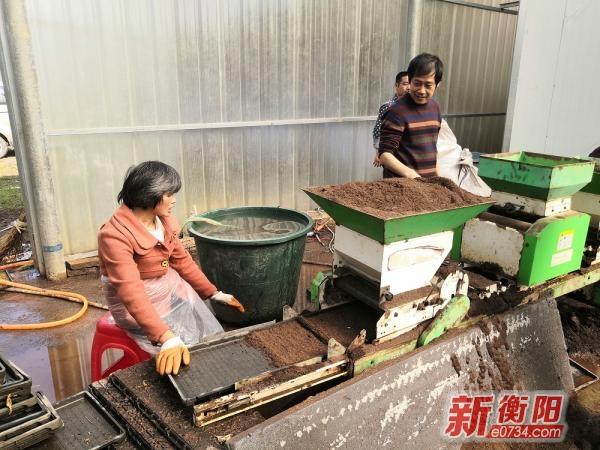 奋战一百天 实现双过半|常宁34.3万亩早稻开启工厂化育秧模式