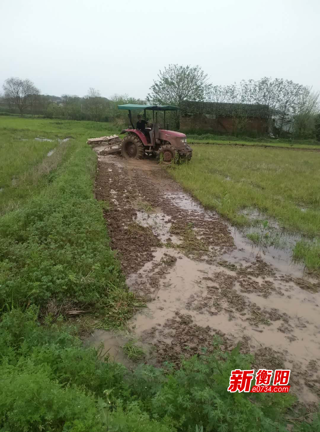蒸湘區呆鷹嶺鎮全力抓好早稻生產 掀起春耕備耕熱潮