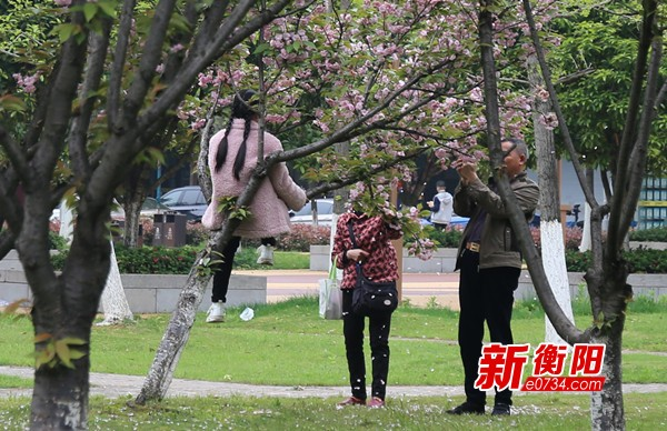"""向不文明行为说""""不"""":春景美好 市民爬树""""赏花""""煞风景"""