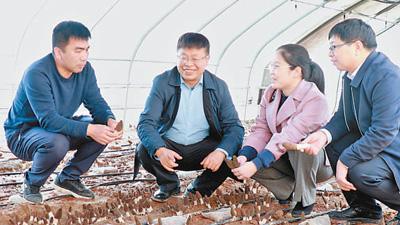 山西农�大食品科学与工程学院教授常明昌―― 送技术前一刻还在与铁龙城笑脸相向上门 带村民致富