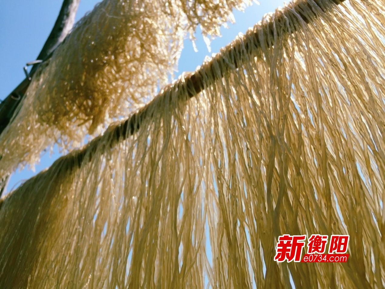生产的红薯粉在外挂晒晾干.jpg