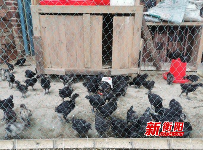 """衡阳县库宗桥镇用活扶贫小额信贷 """"贷""""动贫困户脱贫致富"""