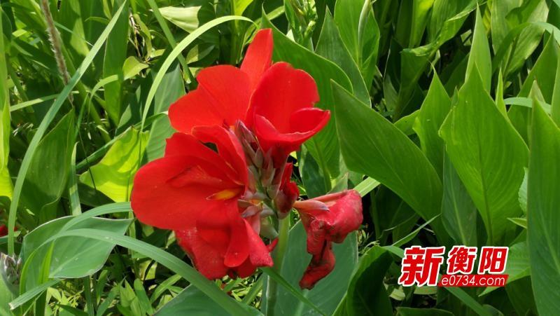 """@衡陽市民 新的一輪強降雨來襲 這個周末又得""""泡湯""""了"""