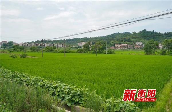 决胜2020:产业扶贫当画笔 贵华村描绘扶贫路上最美风景