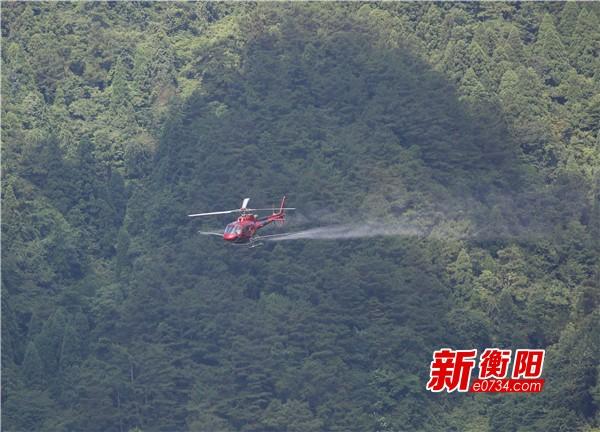 """南岳区用直升机""""飞防作业""""防治虫害 维护森林生态平衡"""