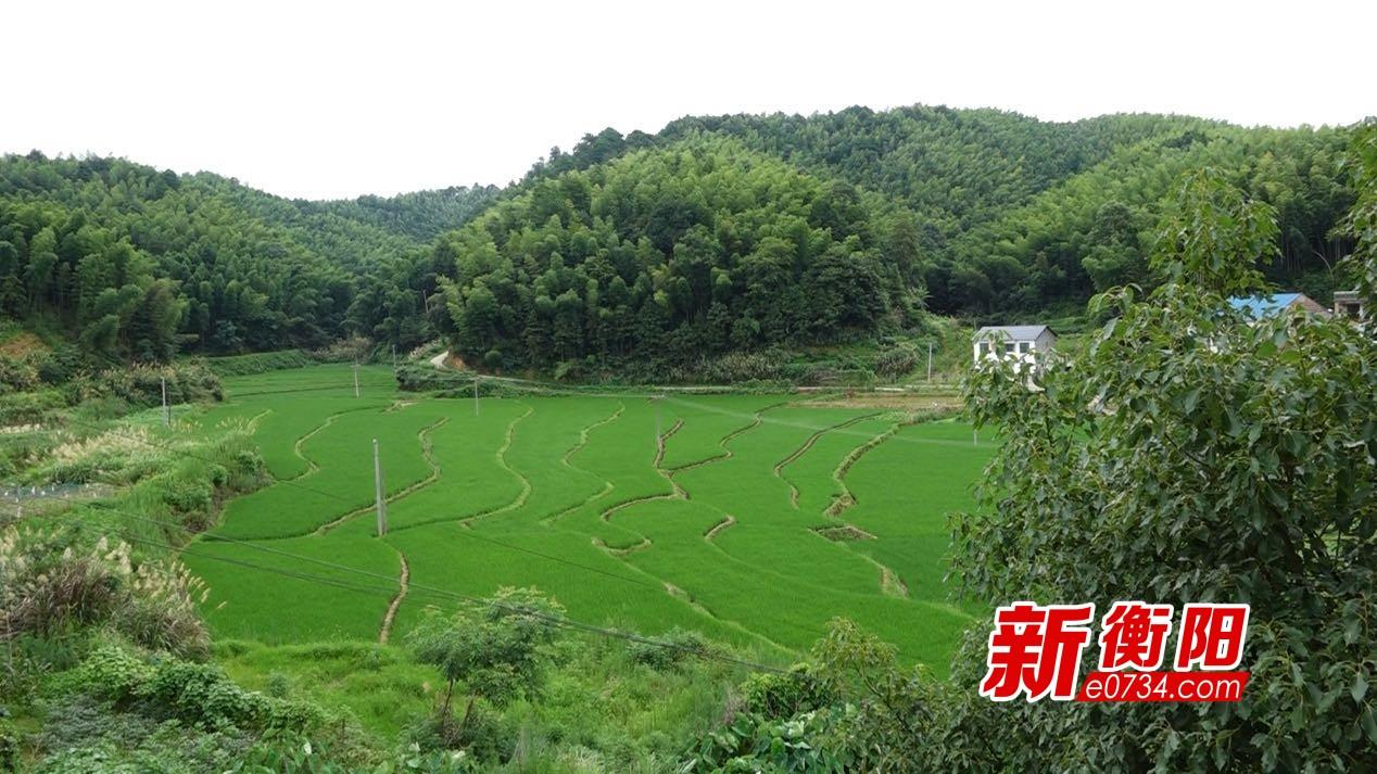 决胜2020:衡山县新桥镇查泉村路通了,水清了,环境更美了